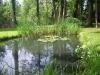 Teich direkt im Garten